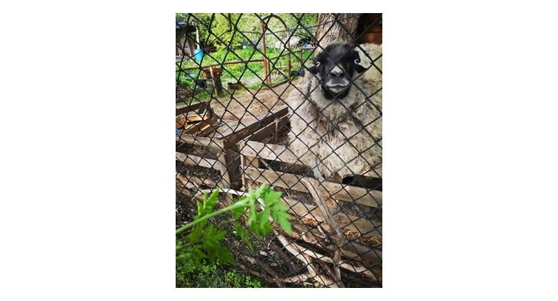 Naturalne ogrodzenie działki a budowa kojca dla psa
